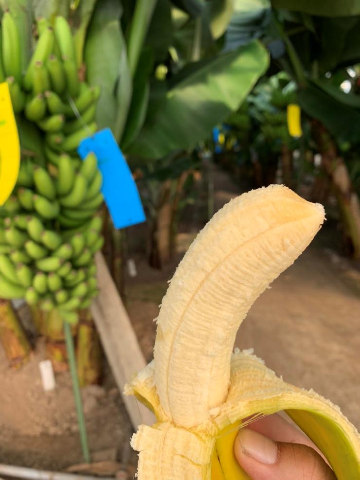 冷凍 ごと バナナ 皮 皮はむく?むかない?バナナのおいしい冷凍方法。流行りの「バナナジュース」レシピも